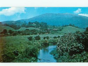 Vintage Post El Yunque Rain Forest Palmer Puerto Rico  # 3760