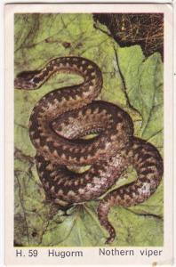 Trade Card Dandy Gum Wild Animals H 59 Adder or Northern Viper