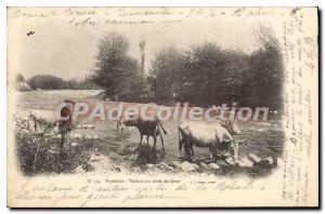 Old Postcard Pyrenees Cows Au Bord Du Gave