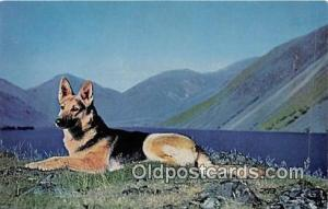 Tess at Wastwater Natural Colour Photography by  WHD Summers Postcard Post Ca...
