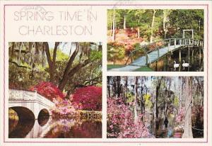 Springtime In Charleston South Carolina