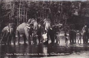 Ceylon Sri Lanka Temple Elephants At Katugstota River Near Kandy 1933 Real Photo