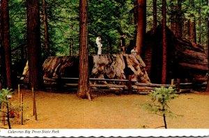 California Calaveras Big Trees State Park Big Stump Is 24 Feet In Diameter