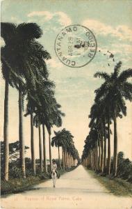 1907-1915 Printed Postcard; Avenue of Royal Palms, Havana Cuba