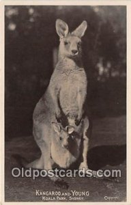 Koala Park, Sydney Kangaroo & Young Postcard Post Card unused