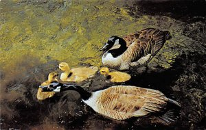 Ducks/Geese Canada Geese Ontario, Canada Unused