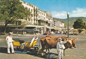 Bullock cart, Funchal, Madeira, Portugal,  50-70s