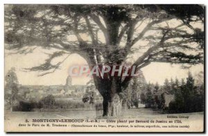 Montigny Lencoup - Cedre plant by Bernard de Jussieu in 1734 in the M Park Tr...