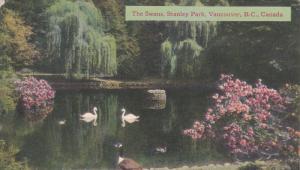 Swans, Stanley Park, Vancouver, B.C., Canada, PU-1949