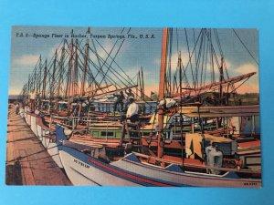 Sponge Boat Fleet in Harbor, Tarpon Springs, FL (FL-113)