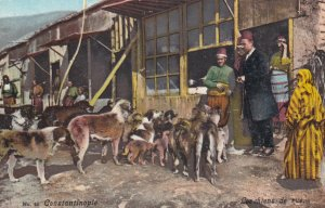 CONSTANTINOPLE , Turkey , 1900-10s ; Dogs in street