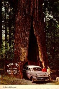 California Myers Flat The Shrine Tree Redwood Highway