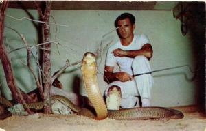 Snake - King Cobra