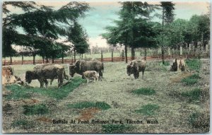 1910s Tacoma Wash. Postcard Buffalo at Point Defiance Park HAND-COLORED Unused