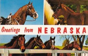 Greetings From Nebraska The Cornshusker State With Horses
