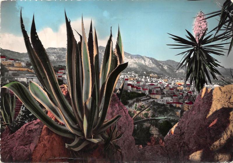 Bg5633 Jardin Exotique De Monaco Agave Americana Yucca En Fleur