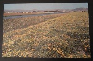 Lompoc California Flower Field Postcard