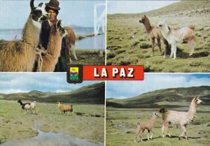 Multi- View, Llamas, Native Women, LA PAZ, Bolivia, PU-1980
