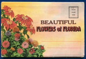 Florida Flowers fl Poinciana Flame vine Zinnias azaleas postcard folder #3