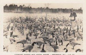 RP: ANSONVILLE , North Carolina , 1940s ; Gaddy's Wild Goose Refuge #5