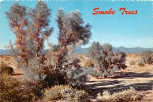 Smoke Trees - Phoenix, Arizona