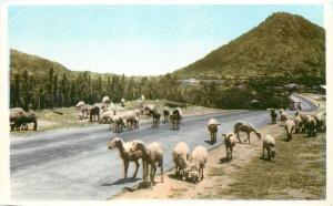 Aruba Netherl Antilles Hooiberg Snata Cruz Postcard Carribean Island sheep lamb