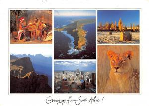 Greetings from South Africa Wildlife Lion  Island Panorama Town