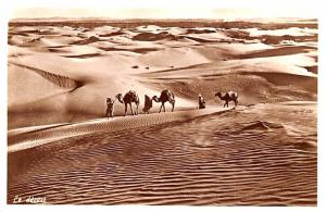 The Desert, Syria Postcard, Syrie Turquie, Postale, Universelle, Carte  The D...