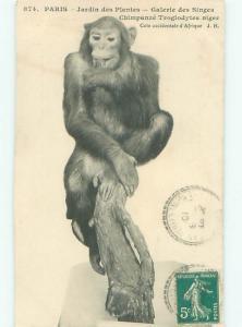 1910 Postcard MONKEY EXHIBIT IN PARIS FRANCE AC3149