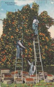 Picking Oranges, California, PU_00-10s