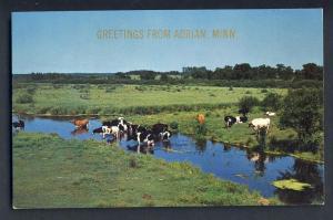 Adrian, Minnesota/MN Postcard, Cows In Stream, Pasture