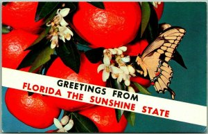 Greetings from FLORIDA Greetings Postcard Oranges Butterfly Chrome 1970
