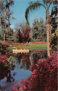 Winter Haven Florida~Cypress Gardens~Boat on Lake Eloise @ Tropical Plants~'50s