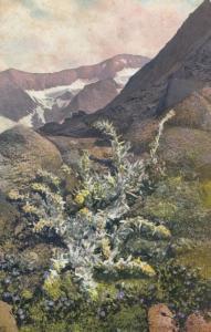 Artemisia Spicita Vintage Flower Postcard