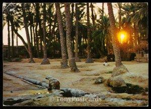 Tunisie, Gabes - Crepuscule dans la palmeraie