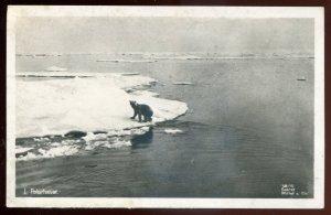 h2240 - NORWAY 1910s Polarhavet. Polar Bear. Real Photo Postcard