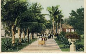 Early Palm Beach, Florida/FL Postcard, Royal Poinciana