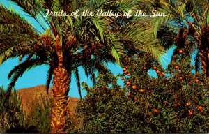Arizona Fruit From The Valley Of The Sun Date Palms and Citrus Trees
