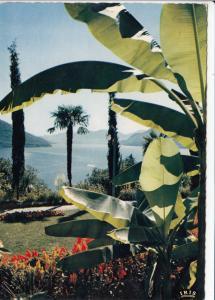 Switzerland, Suisse, BRISSAGO, Parco dell' Hotel Brenscino, unused Postcard