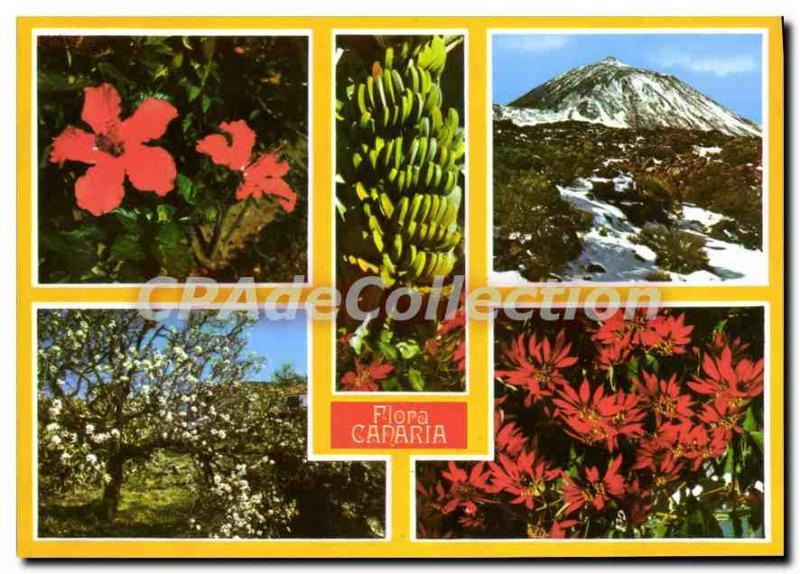 Postcard Modern Tenerife Canaria Flora
