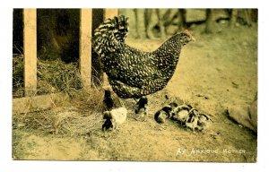 Anxious Mother Hen