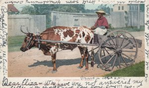 Black Americana , mammy going to market , Ox Cart , 1905