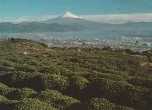 Mount Fuji, Japan - City of Shimizu - pm 1966