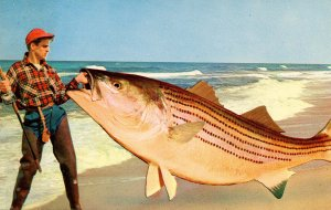 Exaggeration - The little one that didn't get away     (fish)