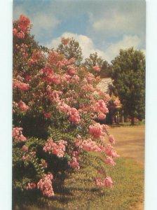 Pre-1980 CALLAWAY GARDENS Pine Mountain City by Clayton & Columbus GA AF6775