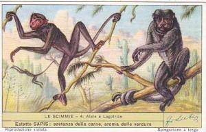 Liebig Trade Card S1603 Monkeys No 4 Atele e Lagotrice