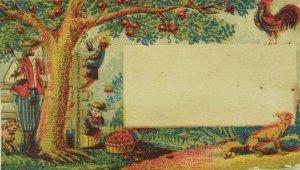 Prof. Taylor Astrologer Fortune Teller Prices Listed Apple Tree Rooster Men P49