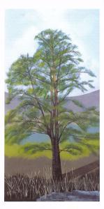 Art Postcard ALDER Alnus Glutinosa Tree by S.M Kinread