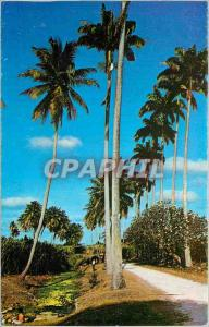 Modern Postcard Barbados Country Scene