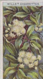 Wills Vintage Cigarette Card Wild Flowers Series No. 45 Travelers Joy 1923